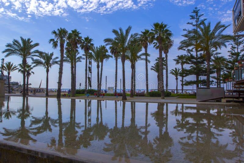 Reflexão das palmeiras em um grande corpo de água na luz solar brilhante fotografia de stock royalty free