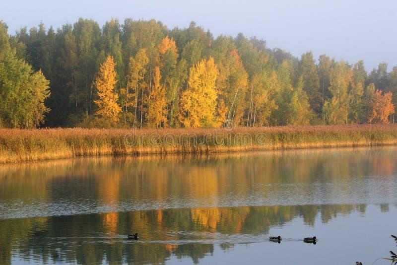Reflexão de cores do outono na água em uma manhã calma fotos de stock royalty free