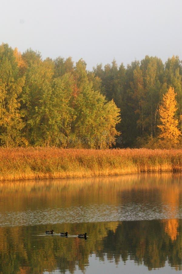 Reflexão de cores do outono na água em uma manhã calma imagens de stock royalty free