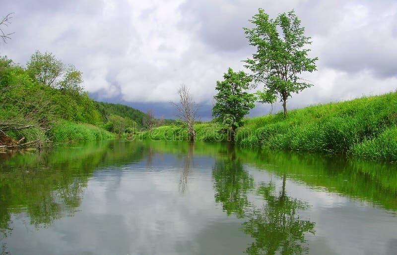 Reflexão de costas verdes foto de stock