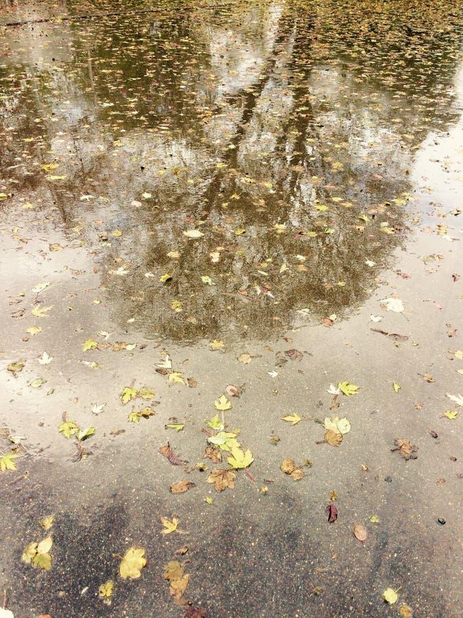 Reflexão de uma árvore na terra molhada fotografia de stock