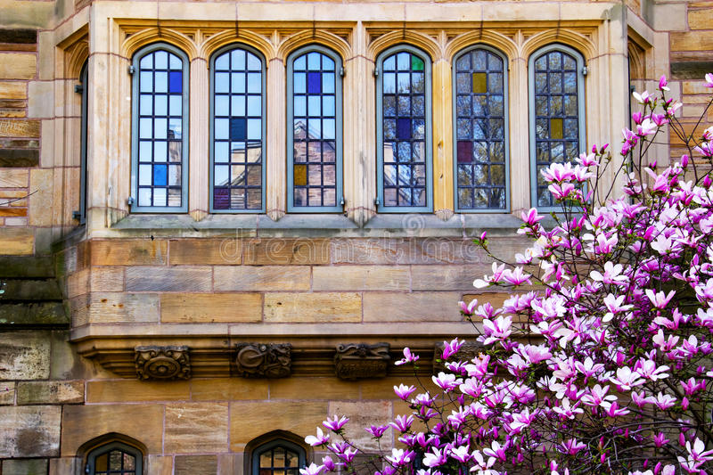 Reflexão de Windows do Magnolia da Universidade de Yale fotos de stock