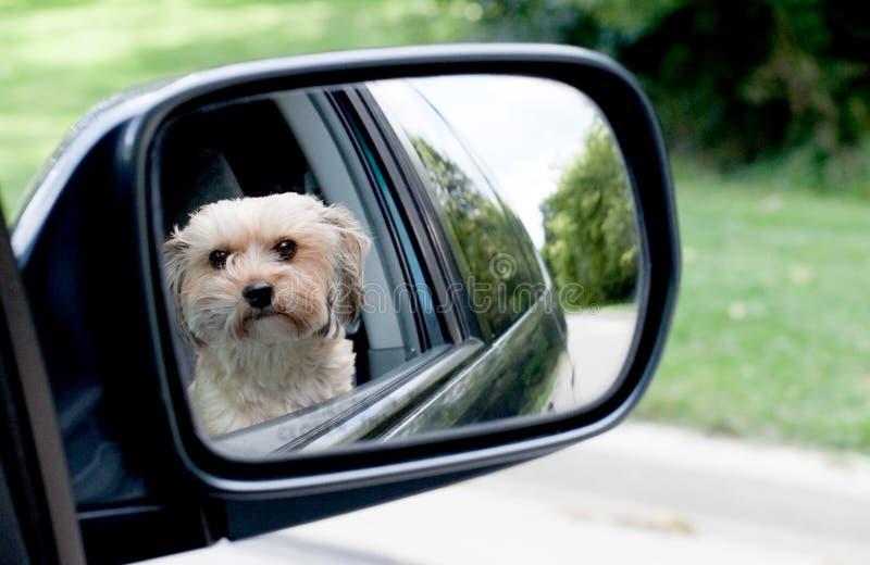 Reflexão do cão fotos de stock
