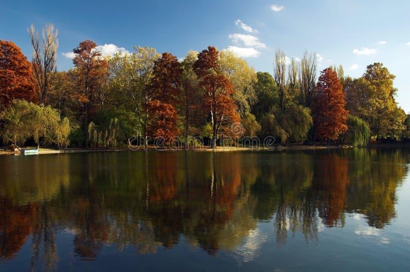 Reflexão do lago da floresta do outono fotos de stock