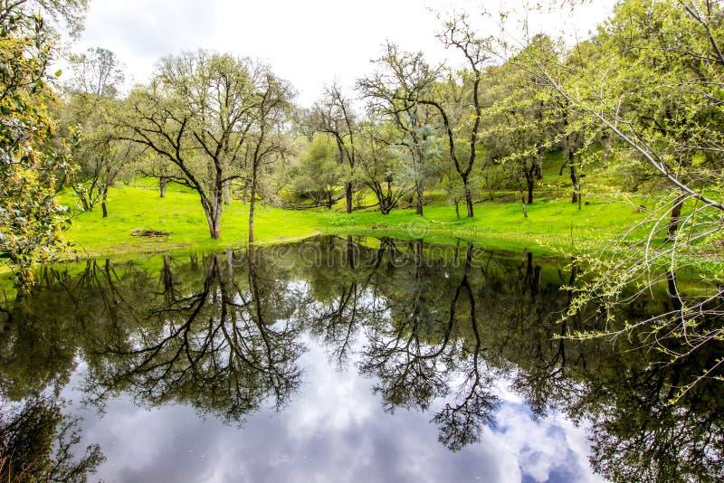 Reflexão na lagoa em campo arborizado imagens de stock royalty free