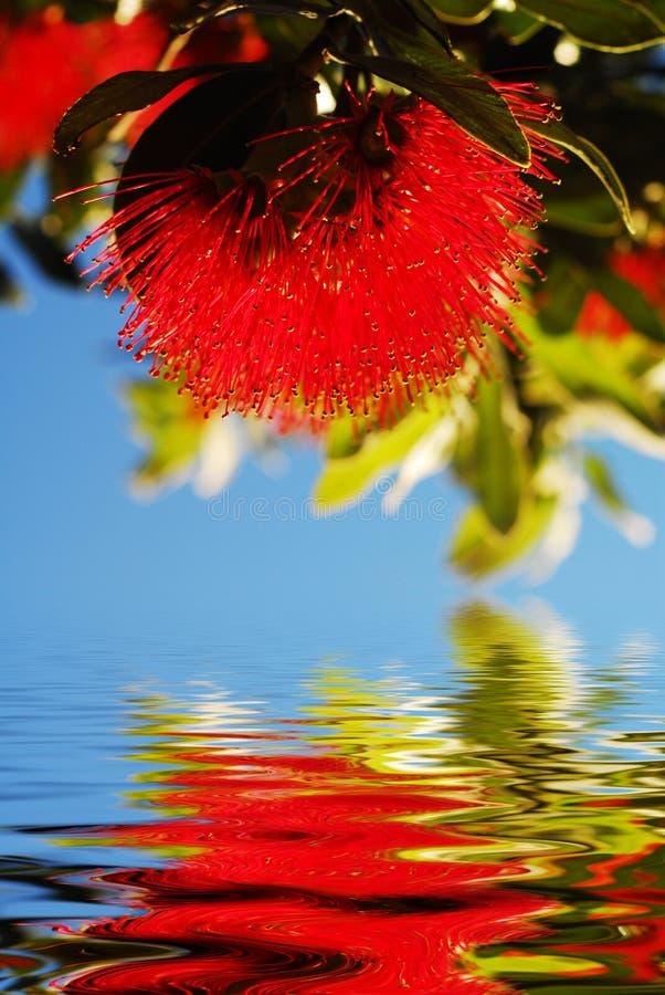 Reflexão nativa da flor fotografia de stock
