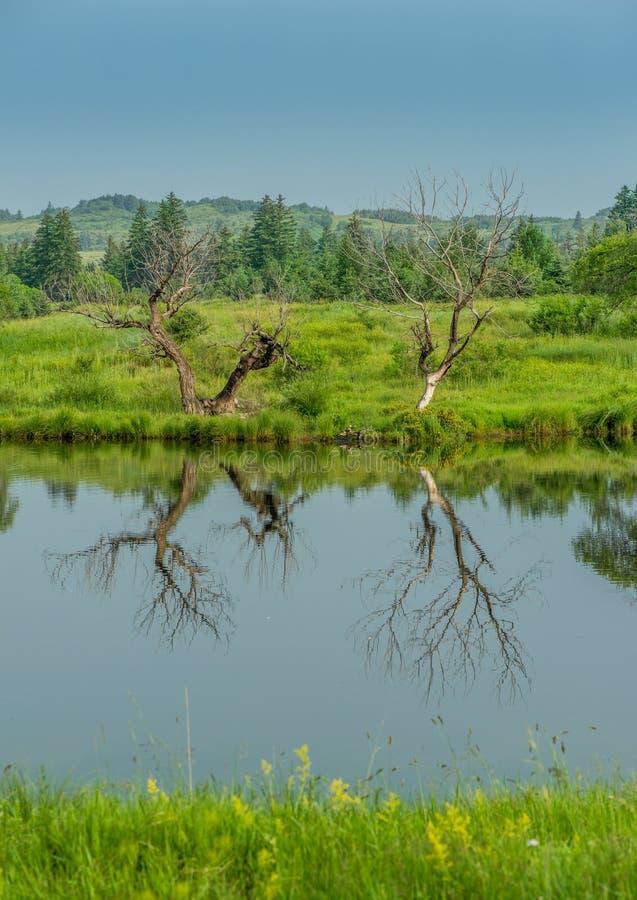 Reflexão no lago fotos de stock royalty free