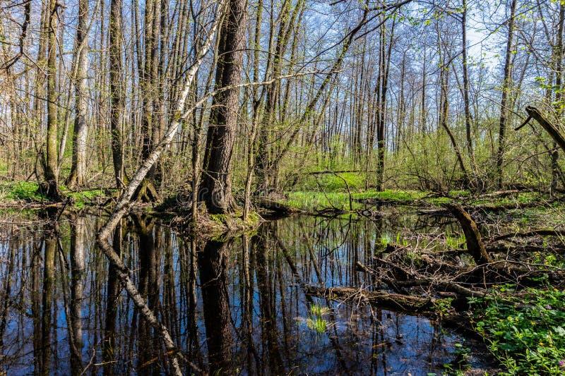 Reflexão no lago da floresta com árvore caída foto de stock