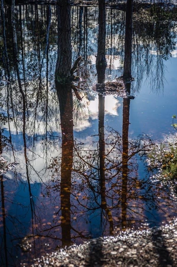 reflexão O lago transbordou Inundação adiantada da mola Fuga de natureza do pântano de Viru Estónia foto de stock royalty free
