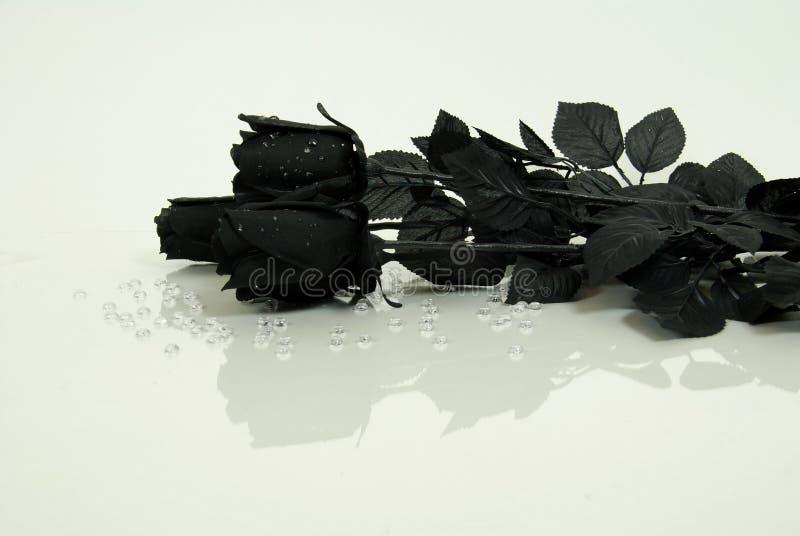 Reflexão preta de Rosa fotografia de stock