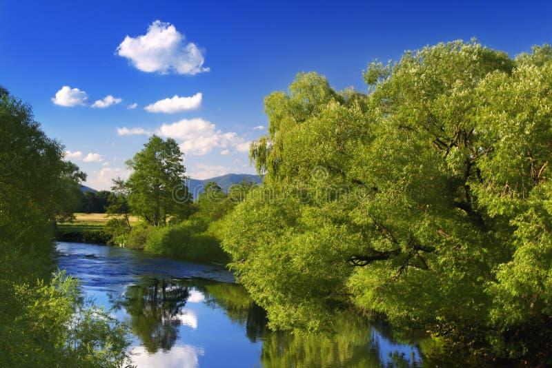 Reflexão verde das árvores imagens de stock