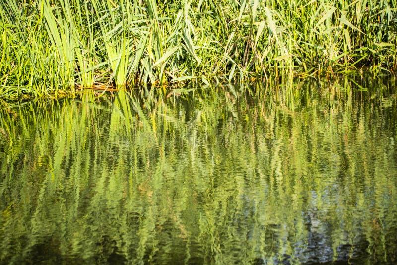 Reflexões bonitas no canal de Chichester em Sussex ocidental, Inglaterra imagem de stock