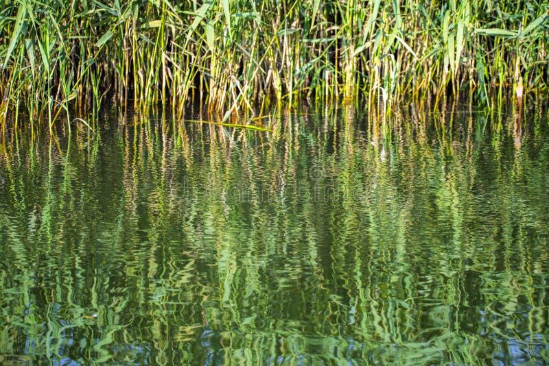 Reflexões bonitas no canal de Chichester em Sussex ocidental, Inglaterra fotos de stock