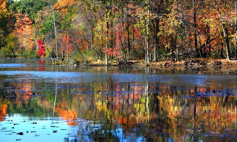 Reflexões coloridas da árvore fotos de stock