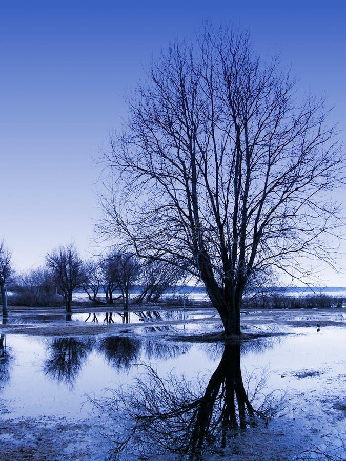 Reflexões da árvore fotografia de stock