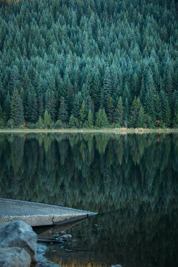 Reflexões da floresta imagens de stock royalty free