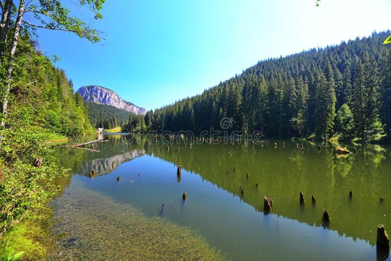 Reflexões da floresta e da rocha do abeto no lago/rosu vermelhos de Lacul fotografia de stock royalty free