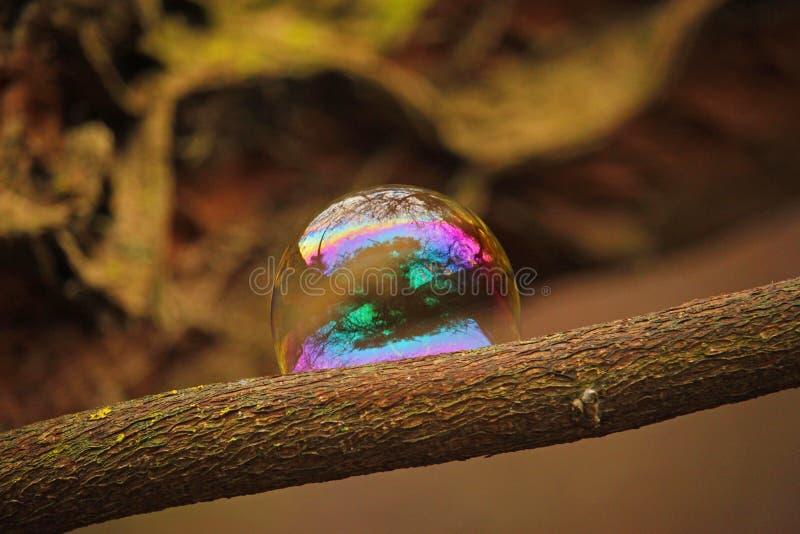 Reflexões da natureza em uma bolha de sabão imagens de stock