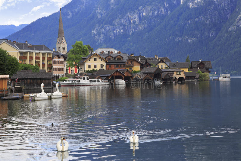 Reflexões da vila e das cisnes de Hallstatt no lago, Áustria foto de stock royalty free