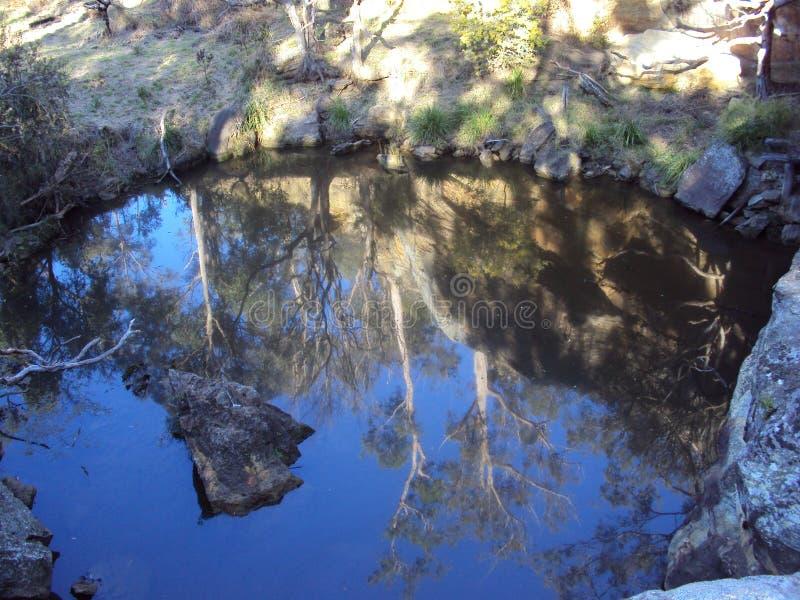 Reflexões de árvores de goma em um waterhole no bushland imagem de stock royalty free