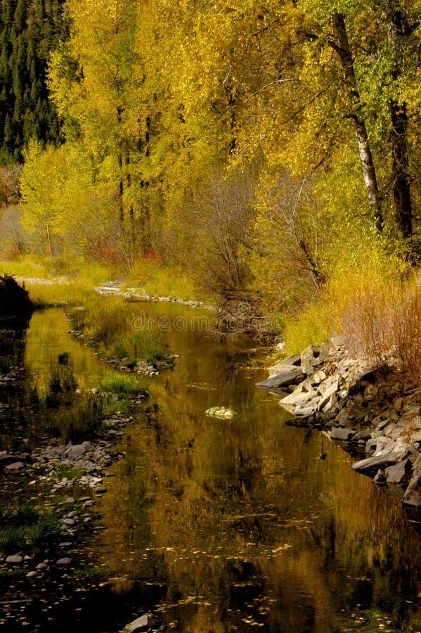 Reflexões de Rock Creek fotos de stock royalty free