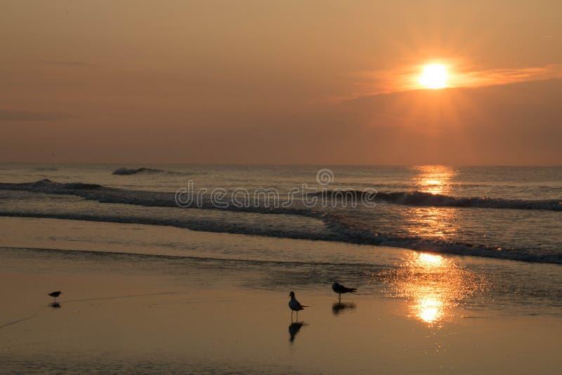 Reflexões do nascer do sol imagens de stock royalty free