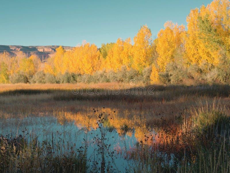 Reflexões do Swamp Breezy Autumn foto de stock royalty free