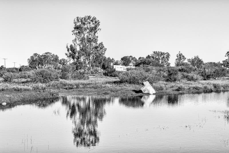 Reflexões em uma lagoa em Willemsrivier monocromático foto de stock