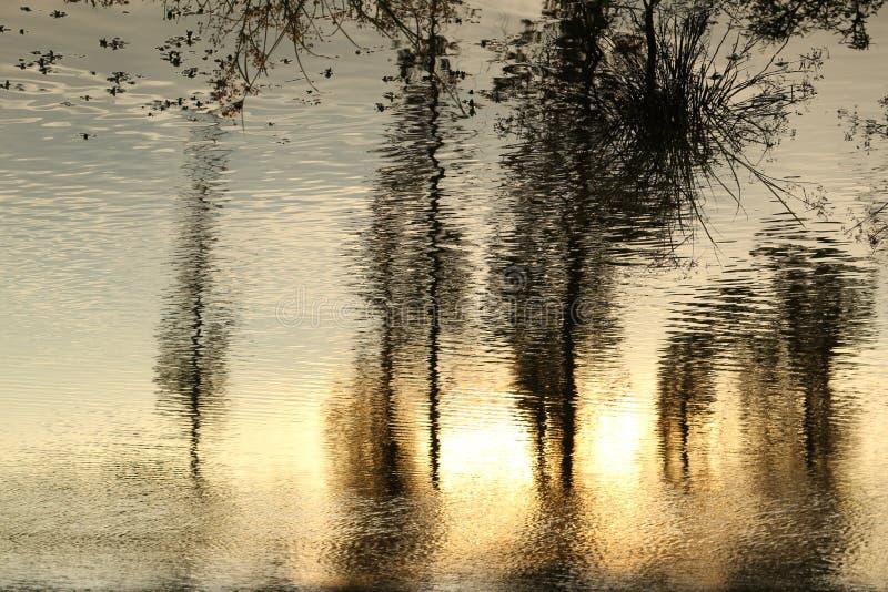 reflex fotografia de stock