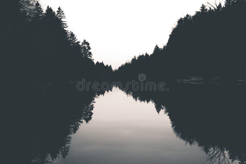 Reflex?o da floresta no lago fotos de stock royalty free