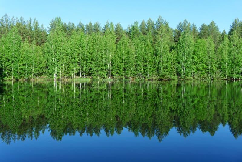 Reflex?o da floresta no lago imagem de stock