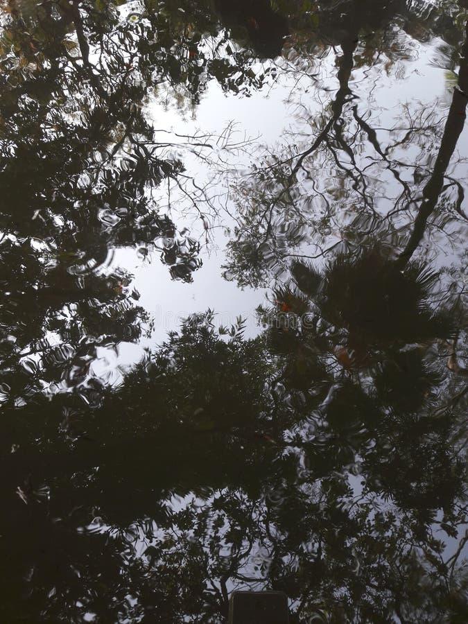 Reflexboom op water stock foto's