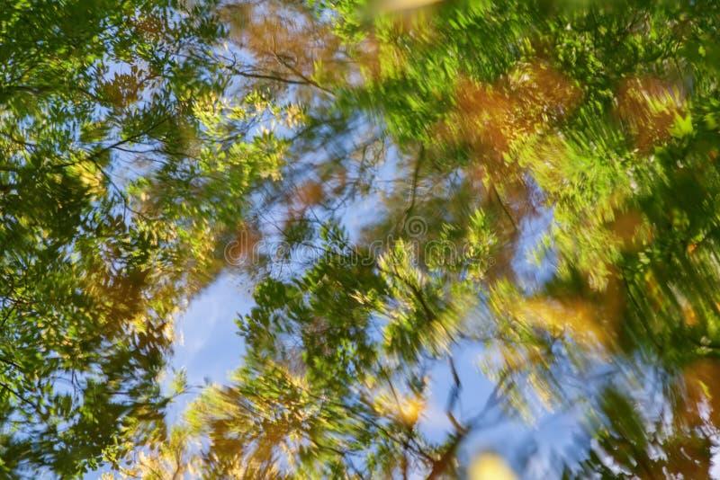 Reflexión abstracta del otoño fotos de archivo