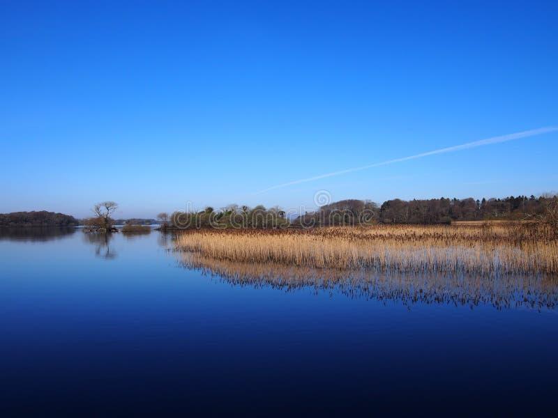 Reflexión azul del lago con las cañas fotografía de archivo libre de regalías