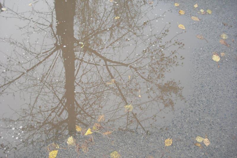 Reflexión de árboles en charco del otoño fotos de archivo libres de regalías