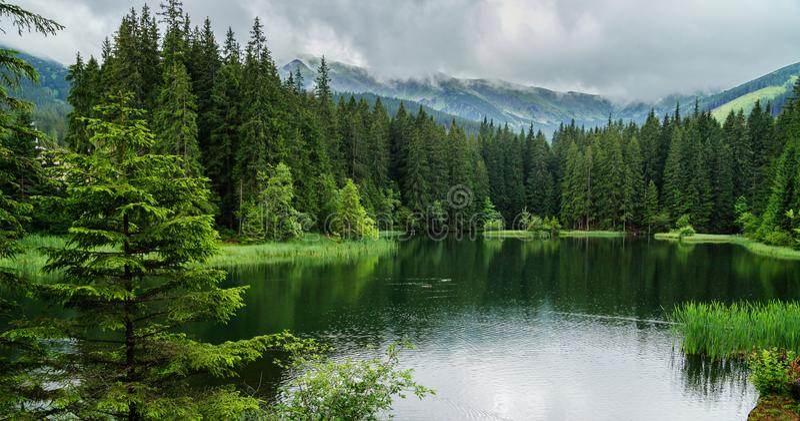 Reflexión de árboles en el lago del bosque, día lluvioso, Eslovaquia fotos de archivo