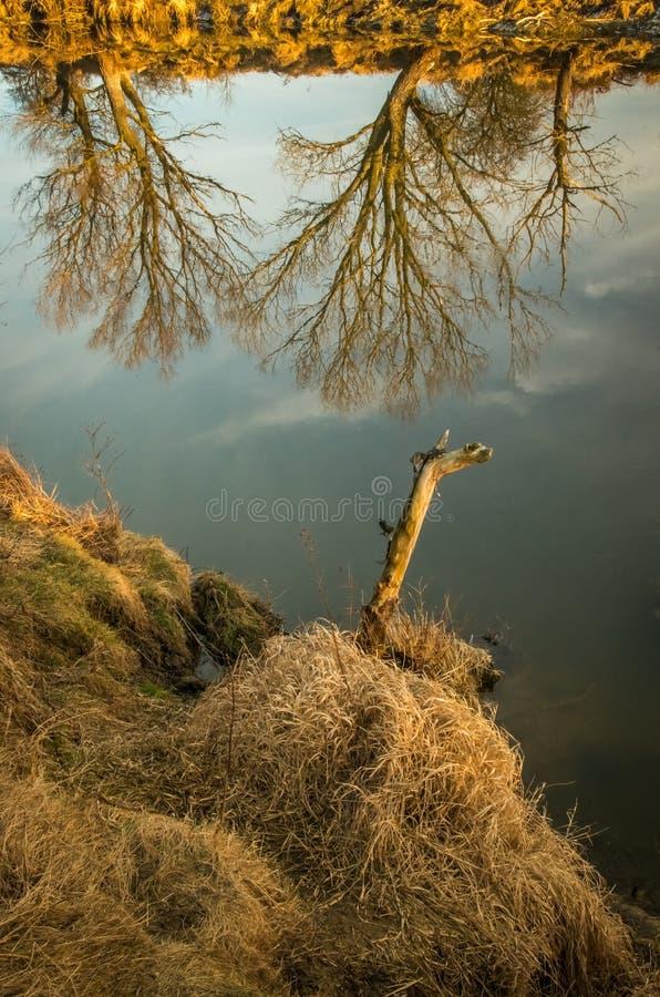 Reflexión de árboles en la superficie del agua en el río imagen de archivo libre de regalías