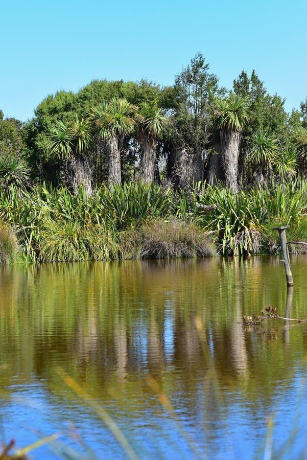 Reflexión de árboles en Travis Wetland Nature Heritage Park en Nueva Zelanda fotos de archivo libres de regalías