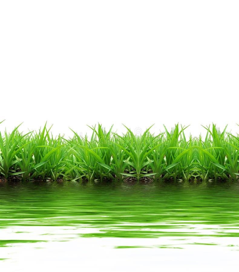 Download Reflexión de la hierba imagen de archivo. Imagen de shape - 7283109