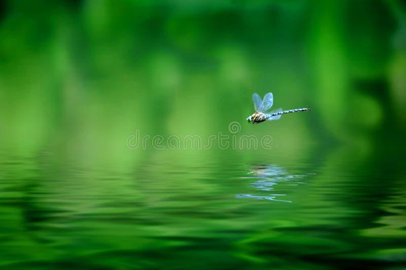 Reflexión de la libélula imagen de archivo libre de regalías