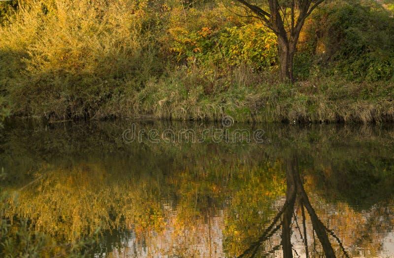 Reflexión de la naturaleza en agua fotos de archivo libres de regalías