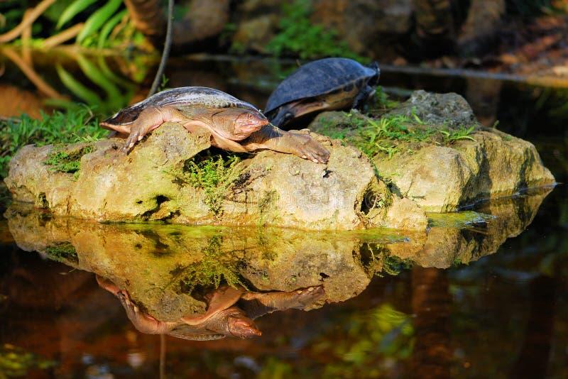 Reflexión de la tortuga imagen de archivo libre de regalías