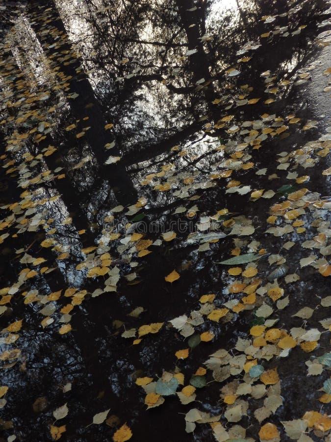 Reflexión de las hojas de otoño en un charco fotos de archivo