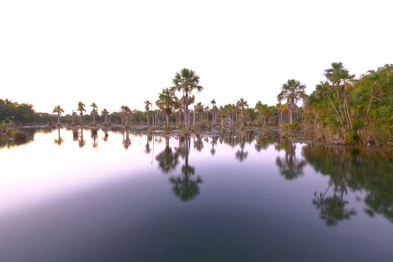 Reflexión de las palmeras en la laguna Lagoa das Araras en la salida del sol, Bom Jardim, Mato Grosso, el Brasil, Suramérica fotos de archivo libres de regalías