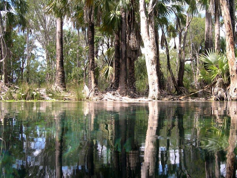 Reflexión de los árboles, Australia fotografía de archivo libre de regalías