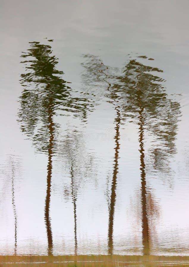 Reflexión de los árboles en agua fotografía de archivo libre de regalías