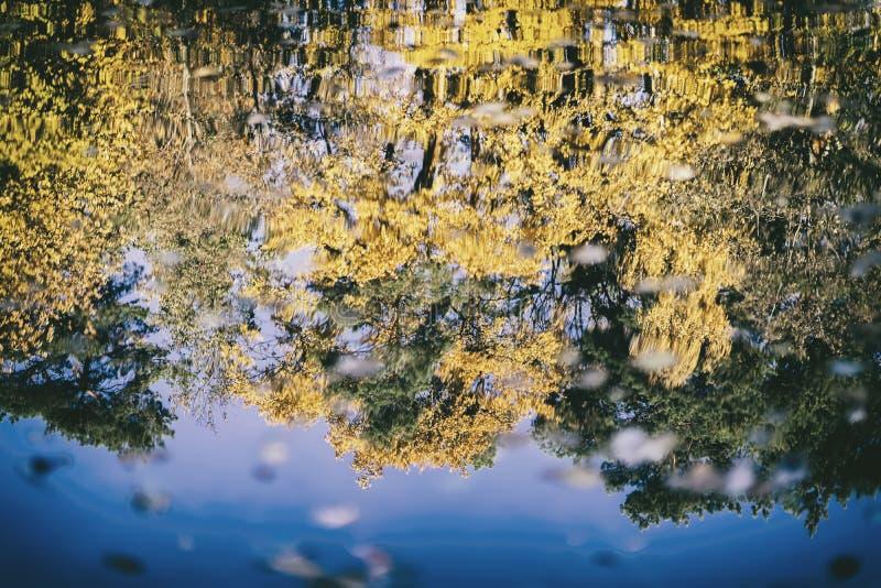 Reflexión de los diversos árboles coloridos brillantes escénicos del otoño Caída, paisaje en el paseo del bosque, humor, concepto foto de archivo libre de regalías