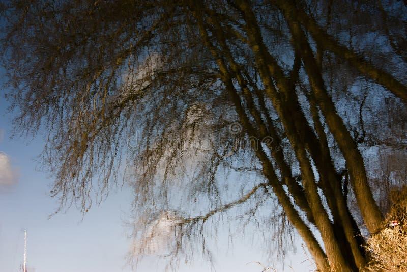 Reflexión de threes en aguas de río fotografía de archivo