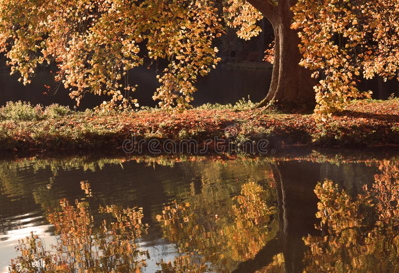 Reflexión de un árbol del otoño fotografía de archivo libre de regalías