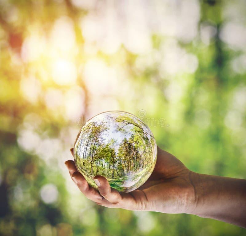Reflexión de un bosque en la bola de cristal sostenida a disposición fotografía de archivo libre de regalías